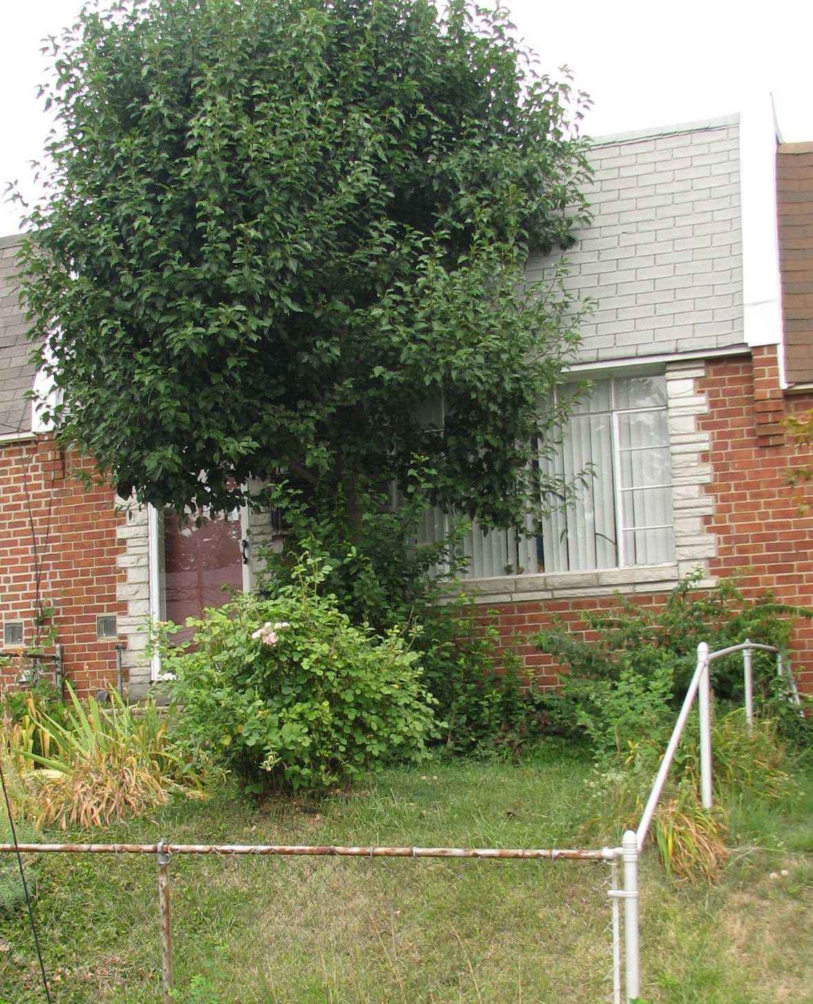 Lower Chi leaders take aim at vacant and blighted houses