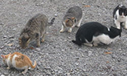 Stray cat supporters could be in the dog house