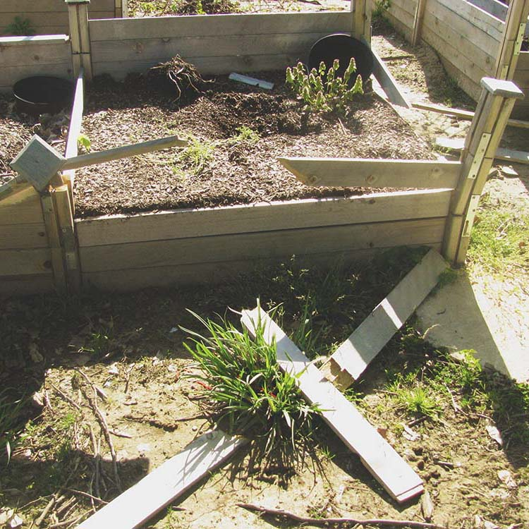 Vandals trash school garden