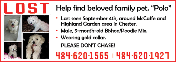 """Help find beloved family pet, """"Polo"""