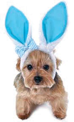 Keep your pets safe and drama-free at Easter