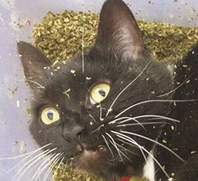 Catnip: The other weed