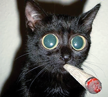 E-cigarettes and pets are NOT a healthy mix