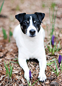 Before purchasing, make sure your mulch is pet-safe such as ones made with pine needles, leaves, or rubber. Photo By Geoff Tischman of Tischman Pets Photography
