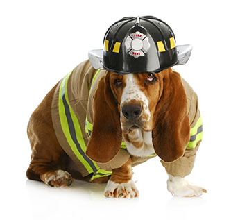 Surviving a house fire with pets takes planning