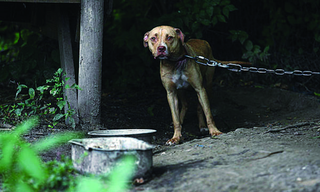 Animal cruelty is growing; you can be an effective fighter against it