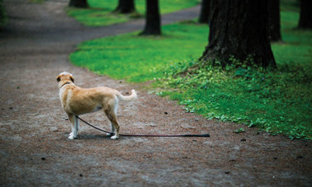 Lost pets: How to prevent them and how to react