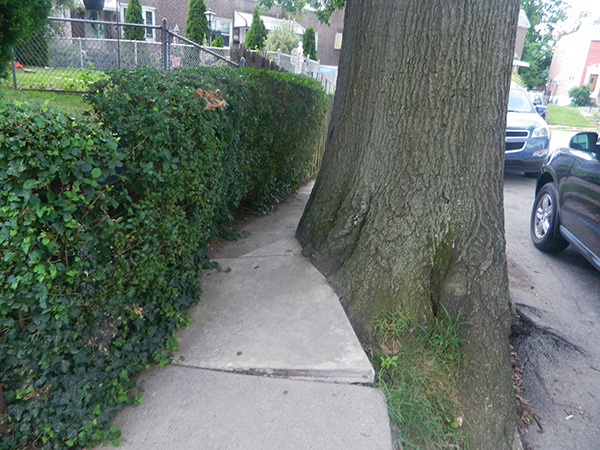 Homeowner can't afford $6,000 fee: Residents fight borough over overgrown tree