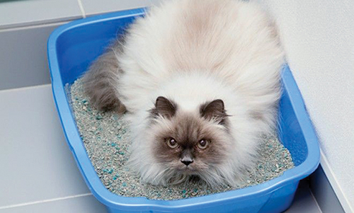 The scoop on cat poop? There's more to it than you think