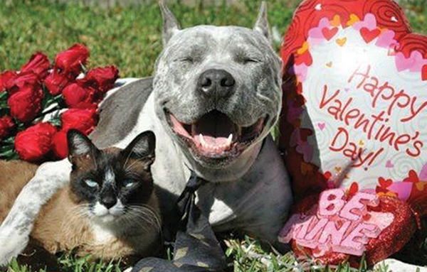 10 ways to celebrate Valentines Day with your pet (or someone else's)