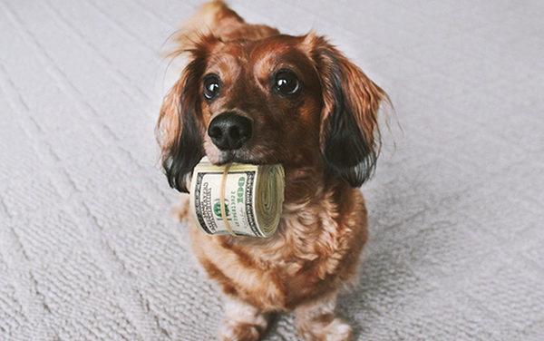 There's money, big money, in animal care