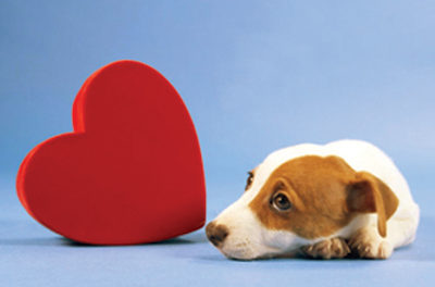 During Heart Month, beware of heart disease signs in pets