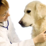 """The dreaded """"C"""" word may not be the end for pets"""