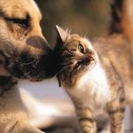 Kidney disease affects dogs and cats