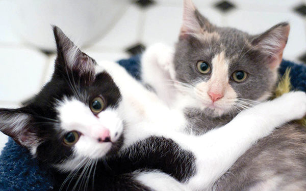 What you need to know about being a foster parent for cats
