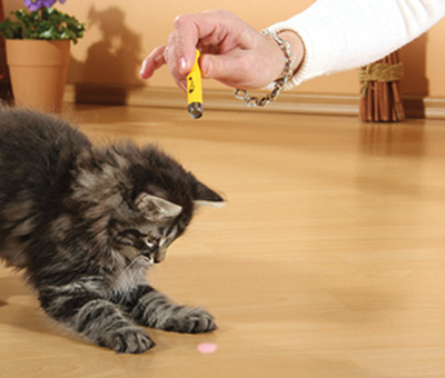 Keep pets laser sharp by keeping them away from lasers