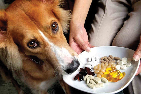 Pet supplements may not be worth the effort