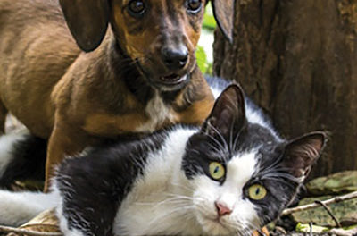 Beware of Lyme disease in cats and dogs this summer season