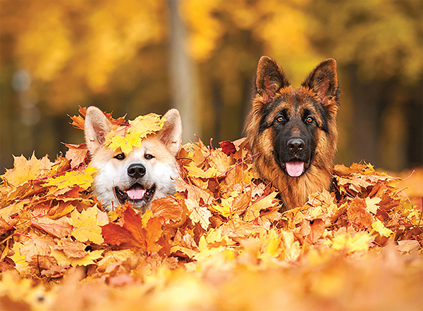 Fall into a seasonal routine with your pet
