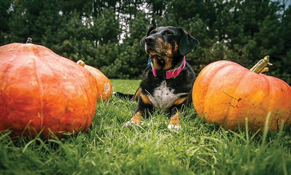 Don't let Halloween be scary for your pets