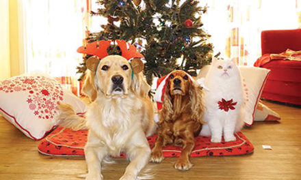 Five ways your Christmas tree can hurt (or kill) your pet