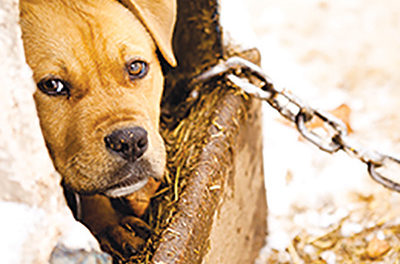 Protecting animals has become more serious with federal oversight