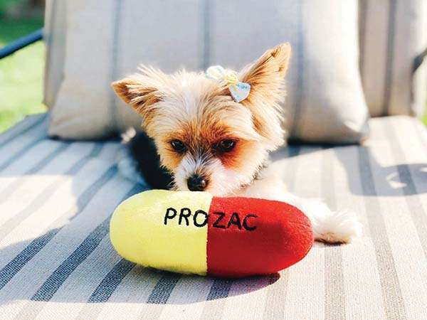 Prozac Could Make A Difference For Your